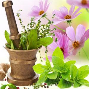 Fragrance Oils for Saint Patricks Day:Basil Sage Mint Fragrance Oil