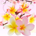 Top Exotic Fragrances: Puakenikeni Hawaiian Flower Fragrance Oil