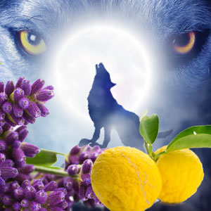 20 Halloween Fragrance Oils: Werewolf Fragrance Oil