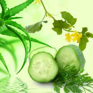 aloe vera and cucumber fragrance oil