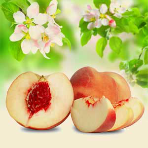 12 Peach Fragrance Oil: White Peach and Silk Blossoms Fragrance Oil