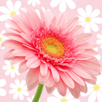 daisy-type