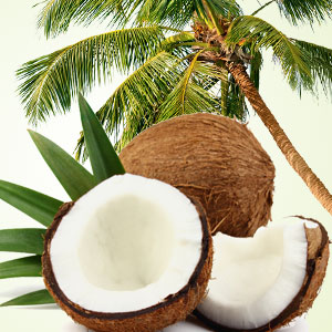 Coconut Candle and Soap Making Supplies: Coconut Craziness Fragrance Oil