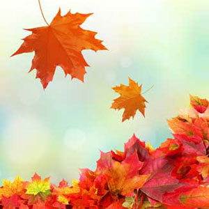 Fresh Fallen Leaves Fragrance Oil