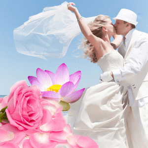 Most Popular Wedding Fragrance Oils Honeymoon Romance Fragrance Oil