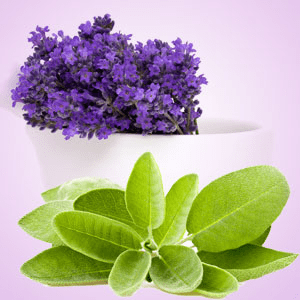 Lavender Sage Fragrance Oil