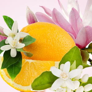 Popular Orange Fragrance Oils: NG Magnolia & Orange Blossom Type Fragrance Oil