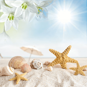 Popular Tropical Fragrance Oils: NG Sun and Sand Type Fragrance Oil