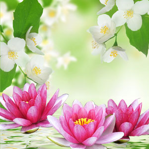 NG Water Lily and Jasmine Type Fragrance Oil