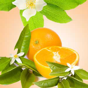 Popular Orange Fragrance Oils: Orange Blossom Fragrance Oil