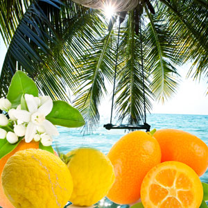 Popular Tropical Fragrance Oils: Palm Island Fragrance Oil