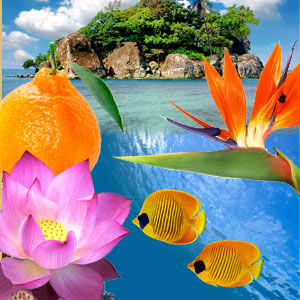 Paradise Reef Fragrance Oil