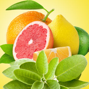 Sage and Citrus Fragrance Oil