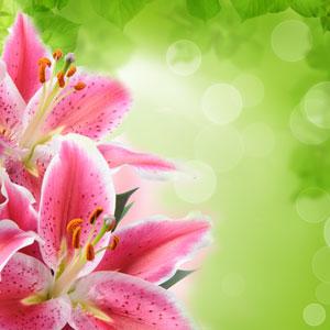 Tiger Lily Fragrance Oil