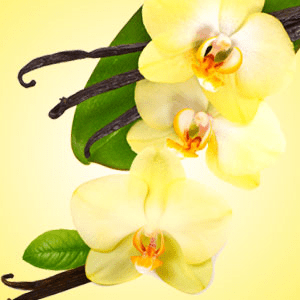 Vanilla Blossoms Fragrance Oil