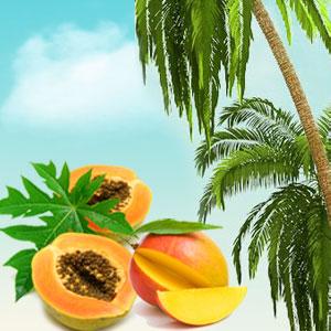 Popular Tropical Fragrance Oils: Papaya Guava Mango Fragrance Oil