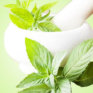 Fragrance Oils for Warmers Peppermint Fragrance Oil