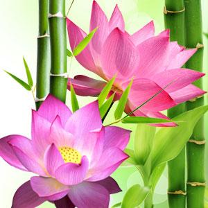 Best Fragrance Oils For Soap Lotus Blossom Fragrance Oil