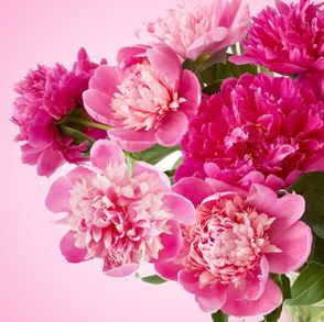 Best Easter Fragrance Oils: Peony Fragrance Oil