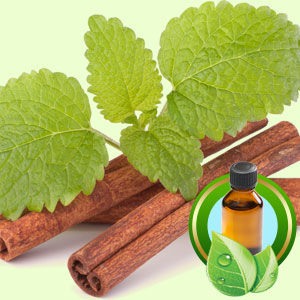 Top 25 Essential Oils Cinnamon Leaf Ceylon Essential Oil