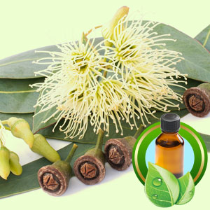 Top 25 Essential Oils Eucalyptus Essential Oil
