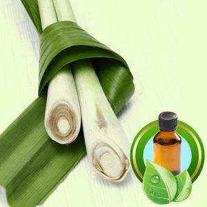 Top 25 Essential Oils Lemongrass Guatemalan Essential Oil