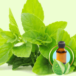 25 Ways to Use Peppermint: Peppermint Essential Oil