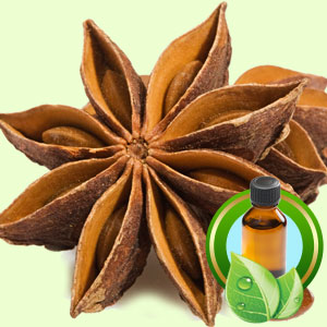 Top 25 Essential Oils Star Anise Essential Oil