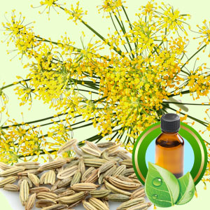 Top 25 Essential Oils Sweet Fennel Essential Oil