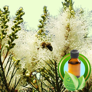 Top 25 Essential Oils Tea Tree Essential Oil