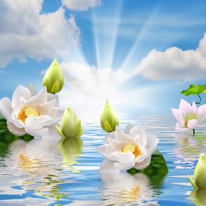 Best Rose Fragrance Oils Heavenly Fragrance Oil