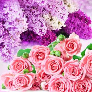 Best Rose Fragrance Oils NG Rose & Violet Type Fragrance Oil