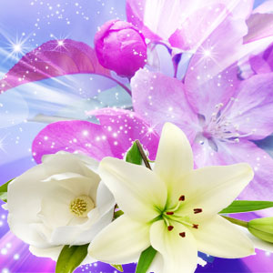 Best Rose Fragrance Oils Angelica Fragrance Oil