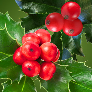 Best Winter Fragrance Oils Holly Berry Fragrance Oil