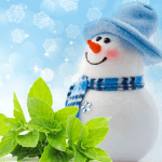 25 Ways to Use Peppermint: Jack Frost Fragrance Oil