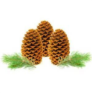 Our Favorite Christmas Crafts: Pinecone Fire Starter Recipe