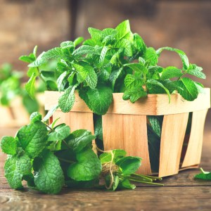 Spearmint Leaf Benefits: Other