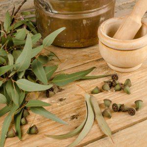 Eucalyptus Benefits: Medicinal