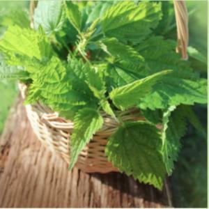 Nettle Bath Bomb Recipe: What is Nettle Leaf