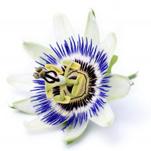 What is Passion Flower Used For?: Other Uses