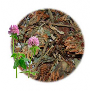 Herbs for Luck and Success: Red Clover Blossoms