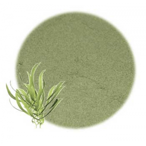 Moisturizing Herbs for Hair: Kelp Powdered Herb