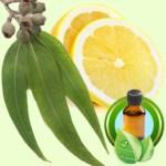 Eucalyptus Lemon Essential Oil