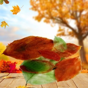 Fall Leaves MP Soap