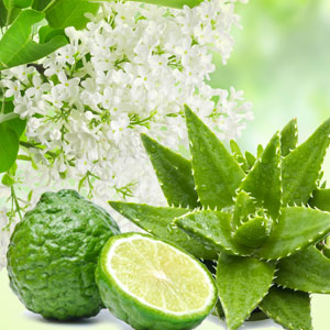 15 Fragrance Oils for St Pattys Day - NG Aloe & White Lilac Fragrance Oil
