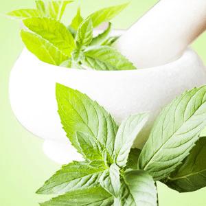 15 Fragrance Oils for St Pattys Day - Peppermint Fragrance Oil
