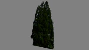 Wood06.x
