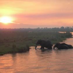 Elephants crossing 1