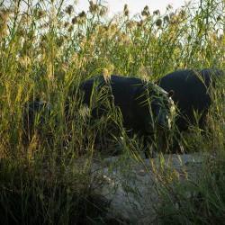Hippo - family (Judit Deak)