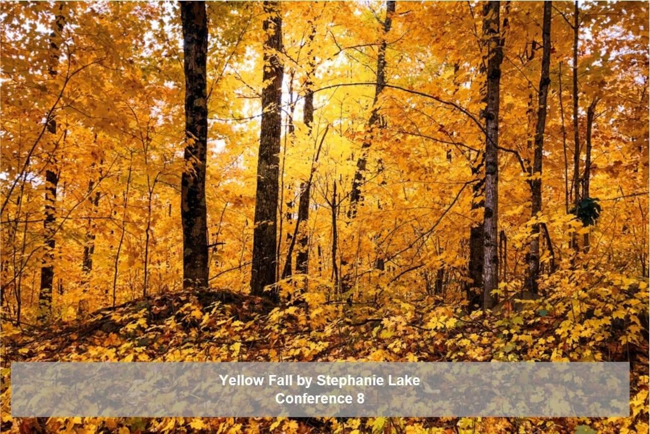 yellow fall by stephanie lake